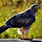 finding freelancers majestic hawk photo