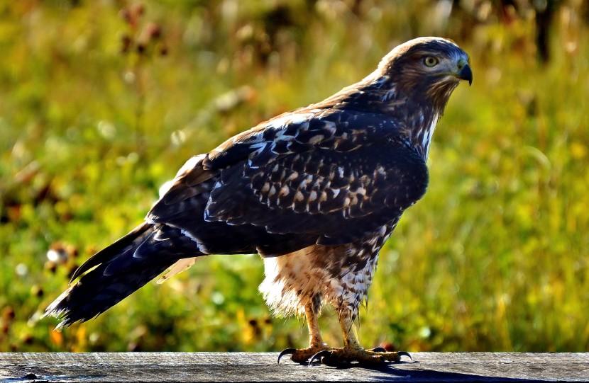 finding freelancers majestic hawk photo