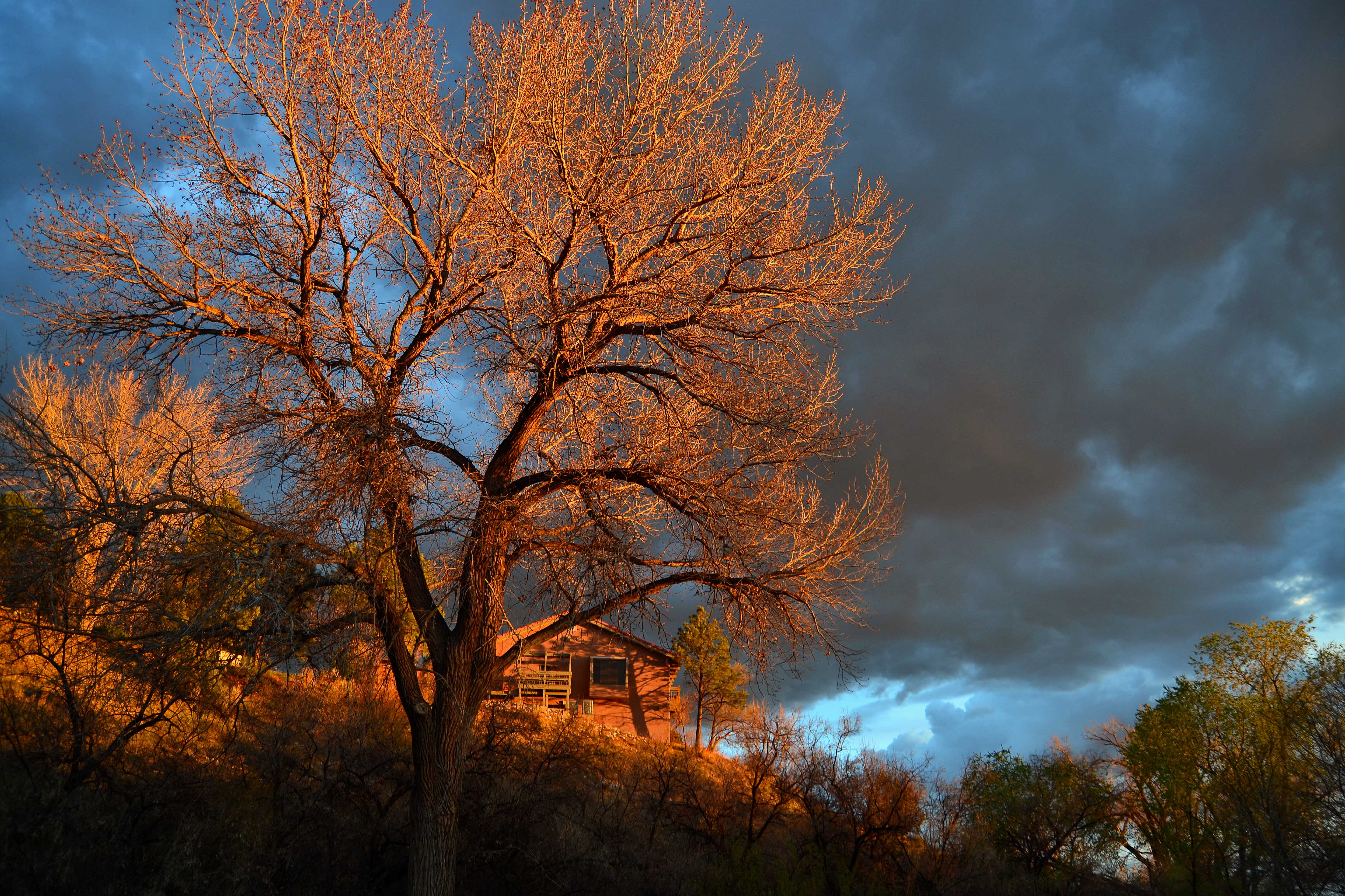 Fiery Sunset Tree and House