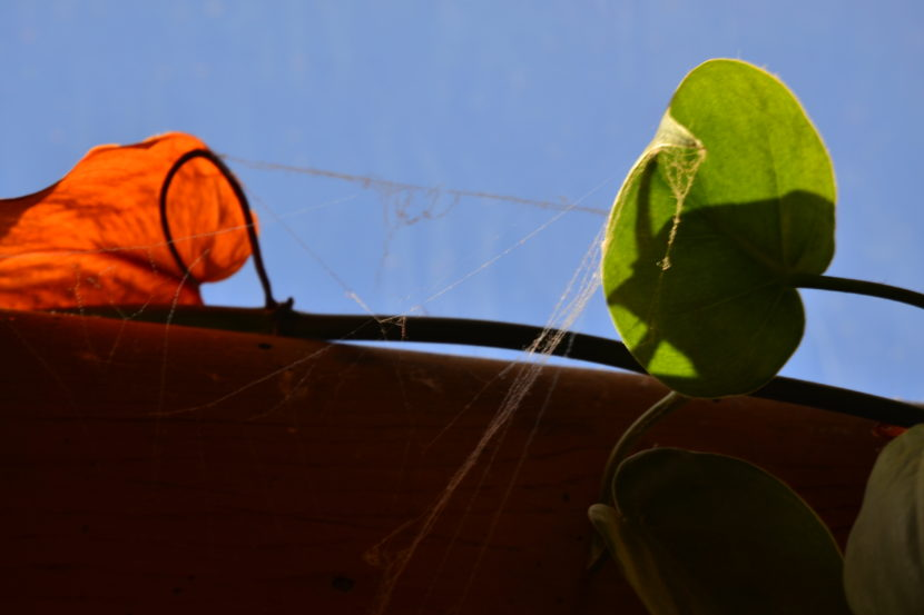 Harmless spider's web on bright leaves - marketing metaphor